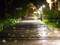 IMG_1247-pathway-at-night-2