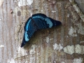 IMG_1419-butterfly-crop