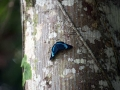 IMG_1424-butterfly