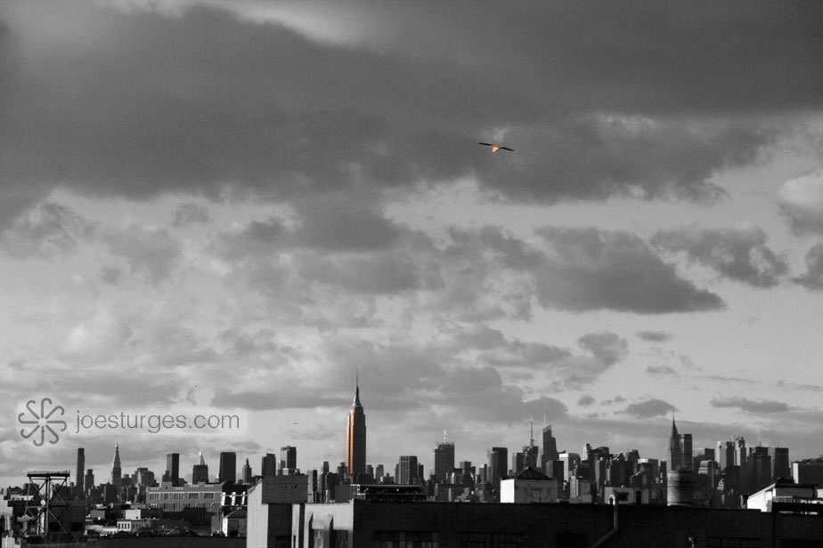 Manhattan skyline from Brooklyn NY with a bird in the distance.