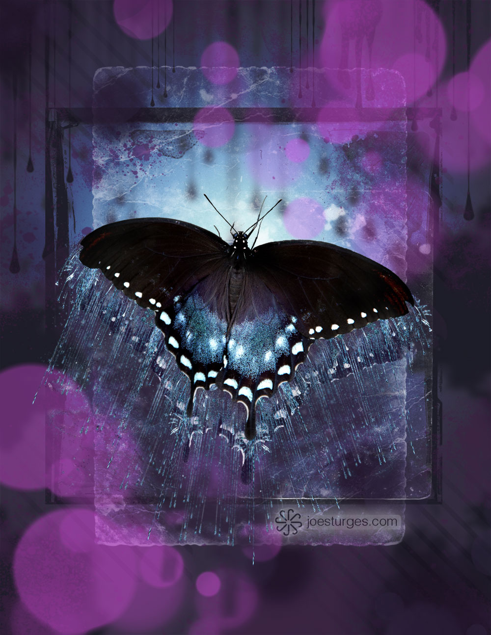 Butterfly on a brush painted background with multiple layers.