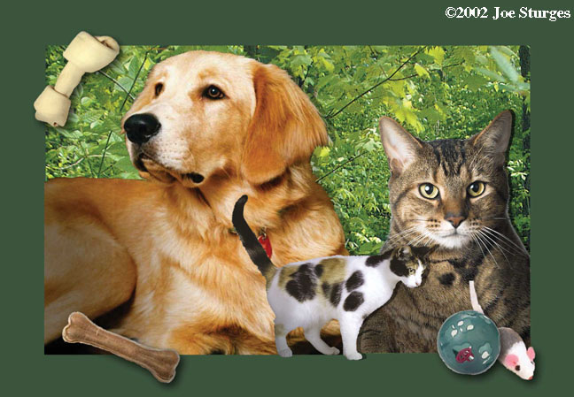 Cortland SPCA Postcard montage and design
