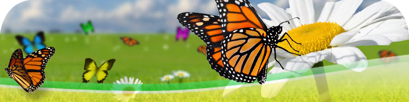 Butterflies and flowers, spring newsletter header image.