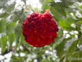 IMG_1620-bouquet-red