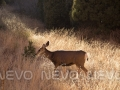 "Sunset""https://www.etsy.com/listing/204023005/garden-of-the-gods-vii-sunset-on-a-deer?ref=shop_home_active_6"" rel=""nofollow"" target=""_blank"">Buy Print</a>"